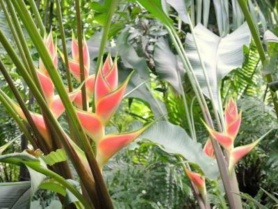 Le jardin des parfums et des pices guide tourisme - Comment supprimer le liseron au jardin ...