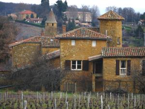 Jarnioux - Vineyards and stone houses in the village, in the Pierres Dorées (golden stones) area