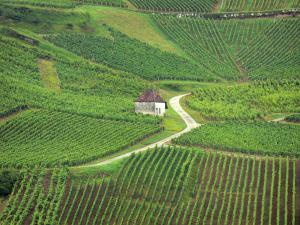 Jura vineyards - Vineyards hut, road and vineyards