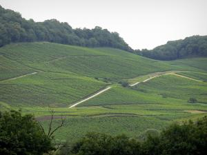 Jura vineyards - Vineyards and trees