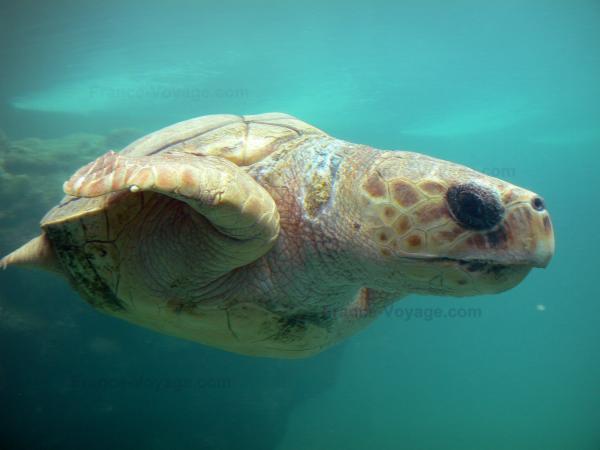 Kélonia, observatoire des tortues marines