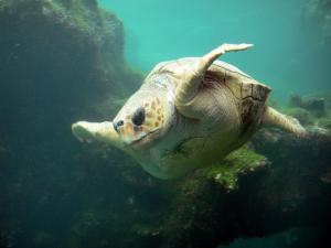 K lonia osservatorio delle tartarughe marine 12 for Stagno tartarughe