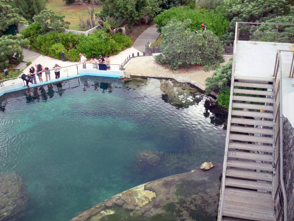 Foto k lonia osservatorio di tartarughe marine guida for Piscina tartarughe