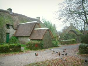 Kerhinet - Narrow street of the village with hens and cocks, houses with thatched roofs (thatched cottages) in the Brière Regional Nature Park