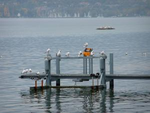 Lake Geneva - Gulls on a pontoon and a lake