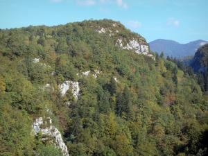 Landscapes of the Ain - Upper Jura Regional Nature Park (Jura mountain range): mountains covered with trees