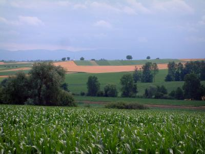 Landscapes of Alsace