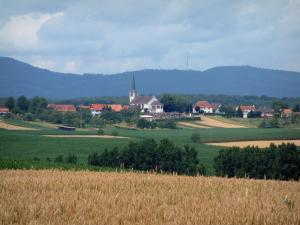 Landscapes of Alsace - Wheat field, trees, village and forest