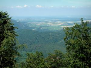 Landscapes of Alsace - From the Haut-Koenigsbourg castle, view of a forest and the Alsace plain