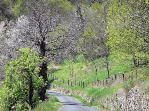 Landscapes of the Ardèche - Regional Natural Park of the Ardèche Mountains - chestnut county: small road lined by trees