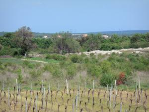 Landscapes of the Ardèche - Vines of the Gras plateau