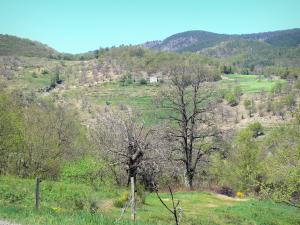 Landscapes of the Ardèche - Regional Natural Park of the Ardèche Mountains - chestnut county: green landscape composed of trees and dry stone terraces