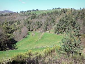 Landscapes of the Ardèche - Green landscape composed of trees and meadows