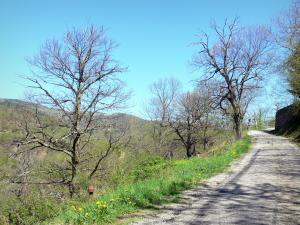 Landscapes of the Ardèche - Regional Natural Park of the Ardèche Mountains - chestnut county: small road lined with trees and wildflowers