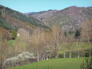 Landscapes of the Ardèche - Regional Natural Park of the Ardèche Mountains: green landscape of meadows, trees and forest