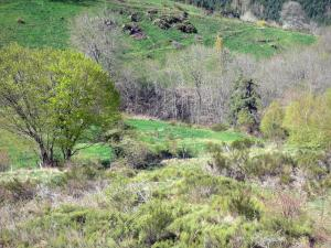 Landscapes of the Ardèche - Pasture dotted with trees