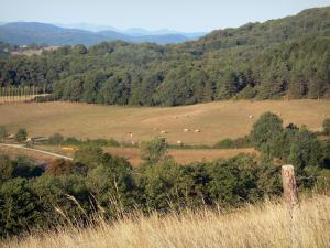 Landscapes of Ariège - Field, trees, pastures, forest and hills
