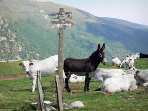 Landscapes of Ariège - Hiking sign showing the direction to the Col de Rose pass and to Pic de Girantes peak, donkeys and cows in a pasture, and Upper Couserans mountains in the background; in the Ariège Pyrenees Regional Nature Park