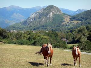 Landscapes of Ariège - Two horses in a meadow, trees and mountains of the Pyrenees mountains in the background