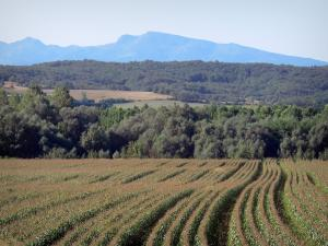 Landscapes of Ariège - Fields, trees and hills