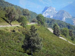 Landscapes of Ariège - Mountain road lined with trees and vegetation