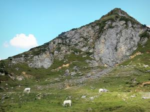 Landscapes of Ariège - Pyrenean mountain and cows in mountain pastures; in the Ariège Pyrenees Regional Nature Park