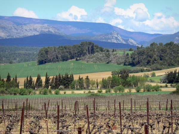 Landscapes of the Aude - Cabardès vineyard with a viez of the foothills of the Black mountain