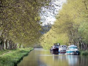Landscapes of the Aude - Canal du Midi: waterway lined with plane trees and its moored boats