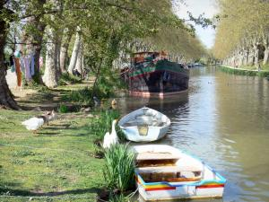 Landscapes of the Aude - Canal du Midi: ducks and geese at the waterfront and moored boats