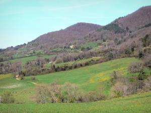 Landscapes of the Aude - Road, meadows, trees and forest
