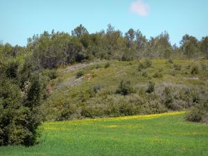 Landscapes of the Aude - Flowering meadow surrounded by vegetation
