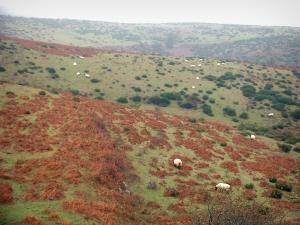 Landscapes of the Aude - Sheep dotted hills