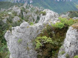 Landscapes of Aveyron - Montpellier-le-Vieux blockfield, in the Grands Causses Regional Nature Park: dolomitic ruiniform rocks