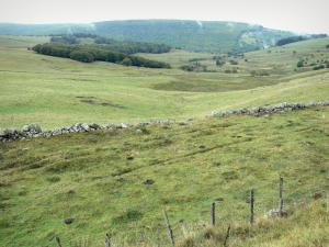 Landscapes of Aveyron - View of the Aubrac pastures
