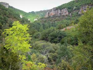 Landscapes of Aveyron - Grands Causses Regional Nature Park: verdant landscape of the Dourbie gorges