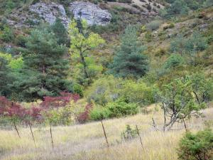 Landscapes of Aveyron - Grands Causses Regional Nature Park: vegetation of the Causse du Larzac