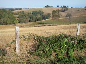 Landscapes of Aveyron - Series of fenced pastures