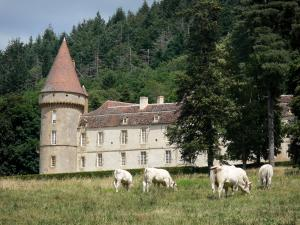 Landscapes of Burgundy - Bazoches castle (former residence of Marshal Vauban), greenery, and Charolais cows in a meadow; in the Morvan Regional Nature Park
