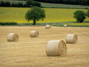 Landscapes of Burgundy - Straw bales, trees and sunflower fields