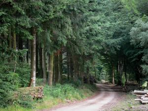 Landscapes of Burgundy - Forest road bordered by trees; in the Morvan Regional Nature Park
