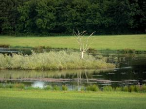 Landscapes of Burgundy - Pond surrounded by greenery