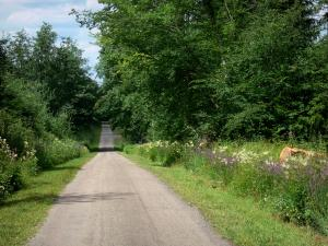 Landscapes of Burgundy - Country road lined with trees and flowers