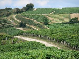 Landscapes of Burgundy - Vineyards of Pouilly