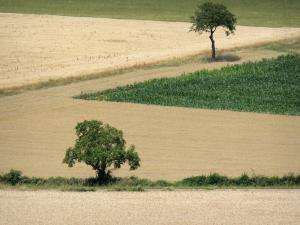 Landscapes of Burgundy - Two trees surrounded by fields