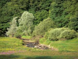 Landscapes of Burgundy - Flowery meadow, stream and trees; in the Morvan Regional Nature Park