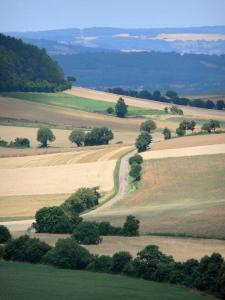 Landscapes of Burgundy - Small road lined with fields