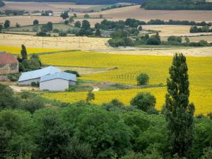 Landscapes of Burgundy - Sunflower fields next to a farm