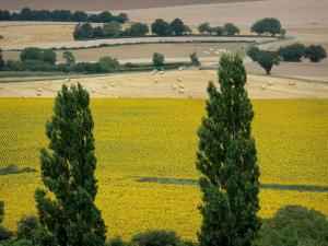 Landscapes of Burgundy - Trees in foreground overlooking series of fields