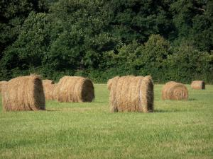 Landscapes of Burgundy - Hay bales in a meadow