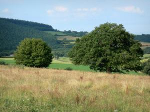 Landscapes of Burgundy - Meadows, trees and forest
